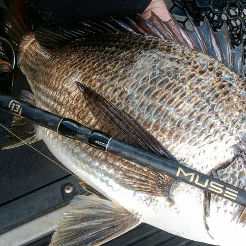 13 Fishing Muse Gold Rods -Ray & Anne's Tackle & Marine site